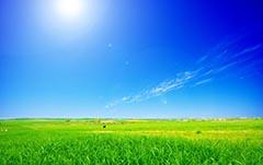 استخدام مهندس کشاورزی و صنایع غذایی