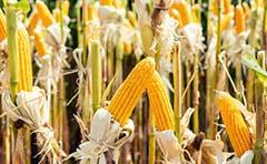 استخدام صنایع غذایی و مهندس کشاورزی